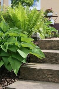 Knebel-Garten: Natursteintreppe mit Bepflanzung